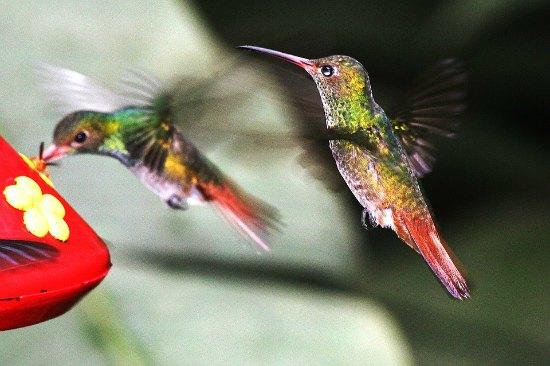 hummingbird feeder wars