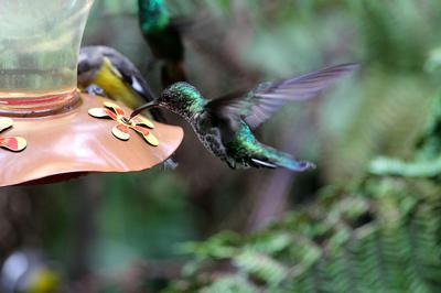 Hummingbird Feeder With Metal Base and hummingbirds eating from it.