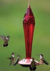 hummingbird fencing match