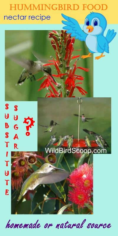 "Three different pictures of hummingbirds eating at a flower or a feeder. Header reads ""hummingbird food nectar recipe."" Other text reads ""substitute sugar?"" ""Homemade or natural source"""