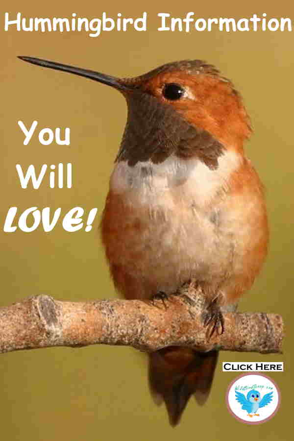 "A hummingbird sitting on a stick with text that reads ""hummingbird information. You will love!"""