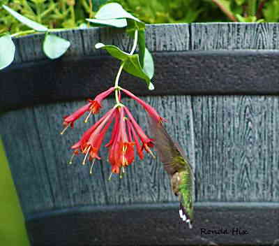 A picture of a wildflower hanging over a barrel.
