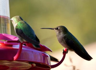 Two hummingbirds pitched at a hummingbird feeder.