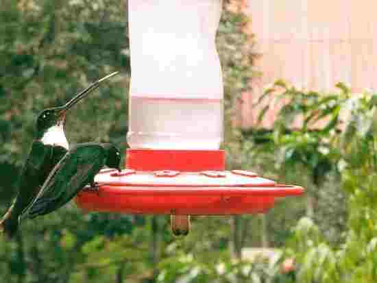 Two hummingbirds eating at a feeder.