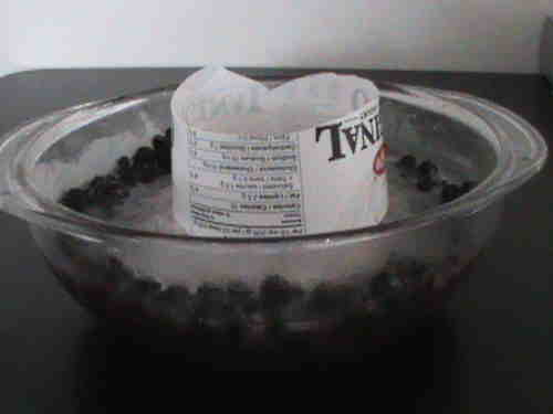 ice-bowl-feeder-blueberries