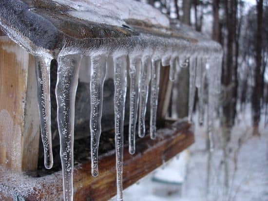 icicles-covering-bird-feeder-must-be-cleaned-off