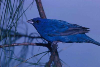do-birds-need-feeders-in-fall