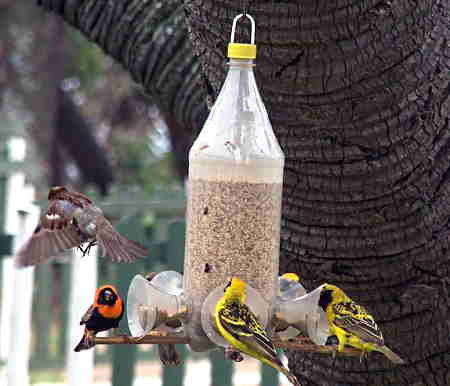 A DIY plastic bottle bird feeder with several birds eating from it.