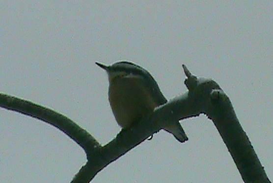 A bird perched on a stick.