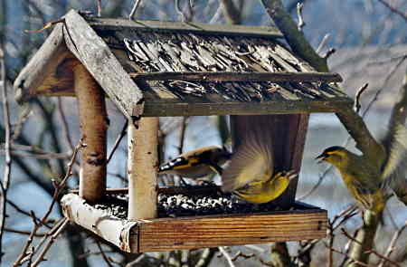 A bird feeder made from branches and other tree materials.