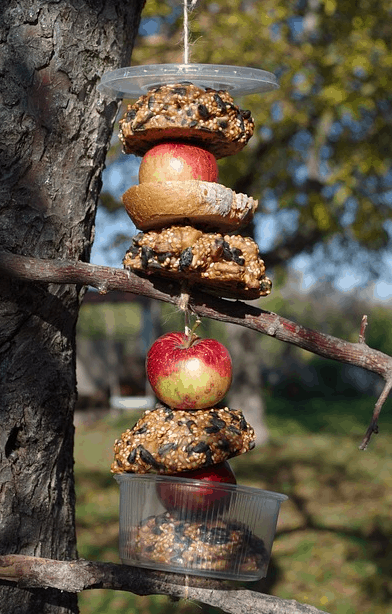 seed feeder with fruit