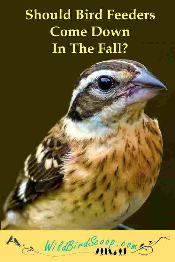 should-we-take-our-feeders-down-in-the-autumn
