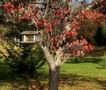 should we take feeders down in fall