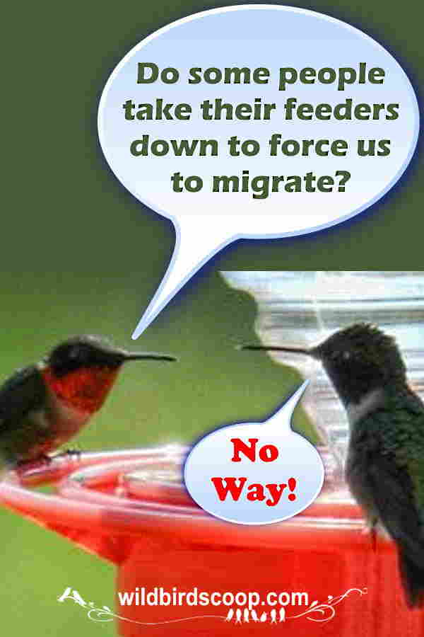 "A picture of two hummingbirds with bubble boxes depicting a conversation between the two. One says ""Do some people take their feeders down to force us to migrate?"" The other one says ""No Way!"""
