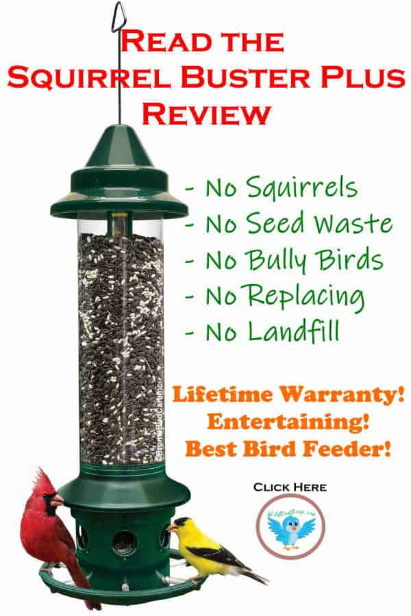 "A picture of the squirrel buster plus bird feeder with two birds eating from it. Header text reads ""read the squirrel buster plus review."""