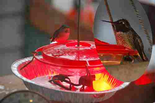 stop hummingbird nectar from freezing
