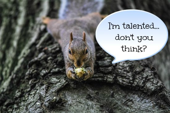 "A squirrel laid out on a tree eating some food. Text bubble reads, ""I'm talented....don't you think?"""