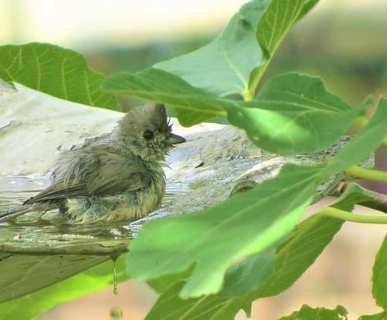 bird  in a bird bath under a covering leaf.