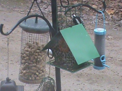 bird feeders quiz