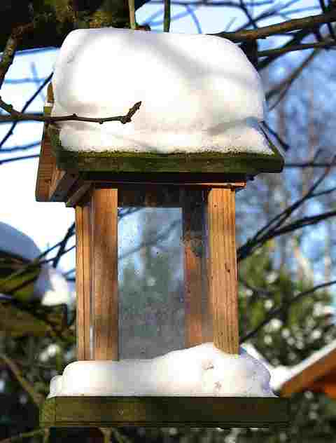 where-do-my-birds-go-in-winter