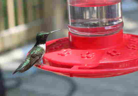 A picture of a hummingbird at a hummingbird feeder.