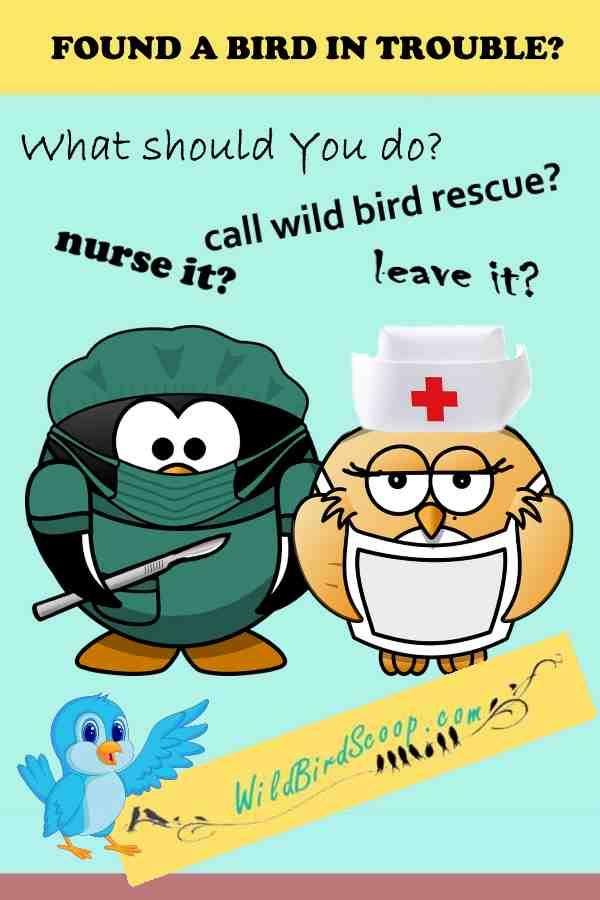 wild bird rescue