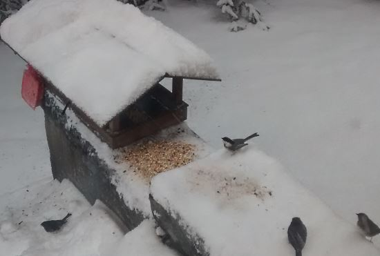 winter-birdfeeder-chickadees-and-juncos