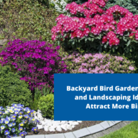 Backyard Bird Gardens: Plants and Landscaping Ideas to Attract More Birds