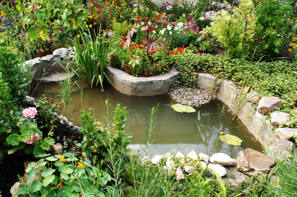A picture of a garden pond, used to attract more birds to the garden.
