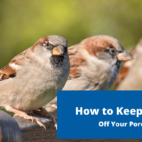 How to Keep Birds Off Your Porch