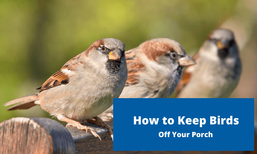 "Three 3 birds sitting on a porch. Text reads ""how to keep bird off your porch."""
