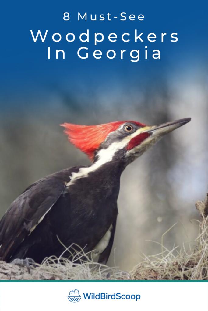 Woodpeckers In Georgia
