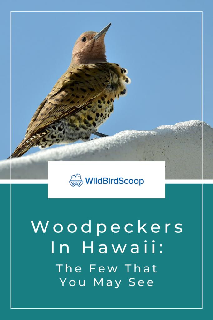 Woodpeckers In Hawaii