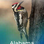 Woodpeckers In Alabama