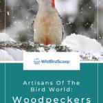 Woodpeckers In Iowa
