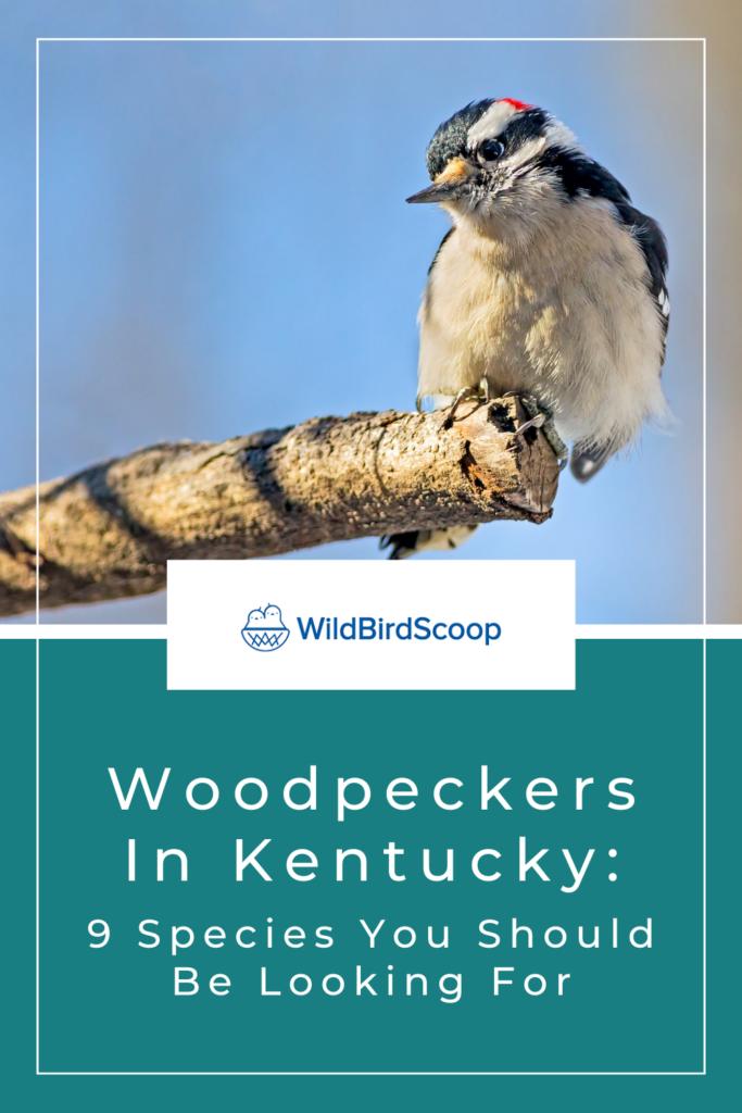 Woodpeckers In Kentucky