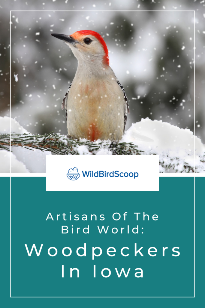 Woodpeckers In Iowa