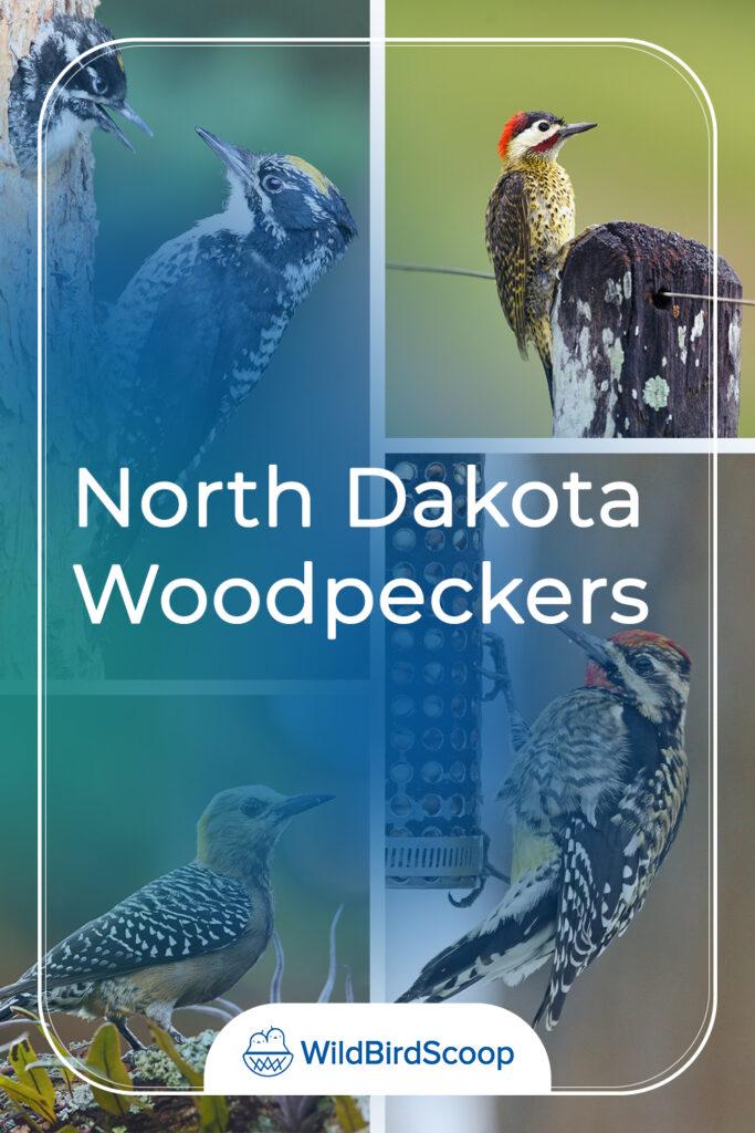 North Dakota Woodpeckers