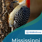 Mississippi Woodpeckers