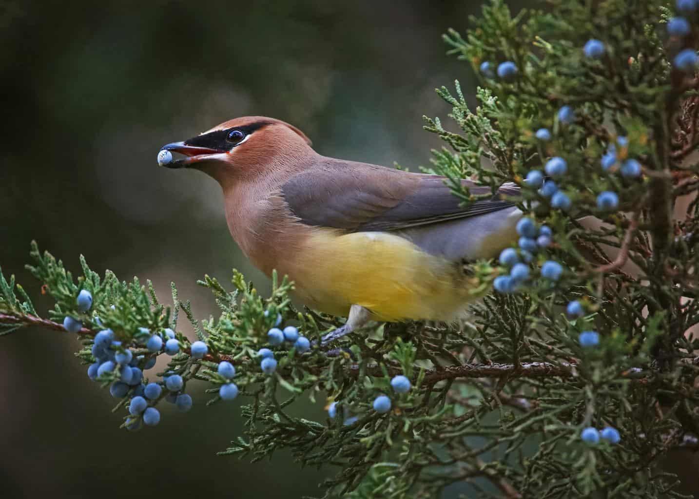 Birds In Alabama
