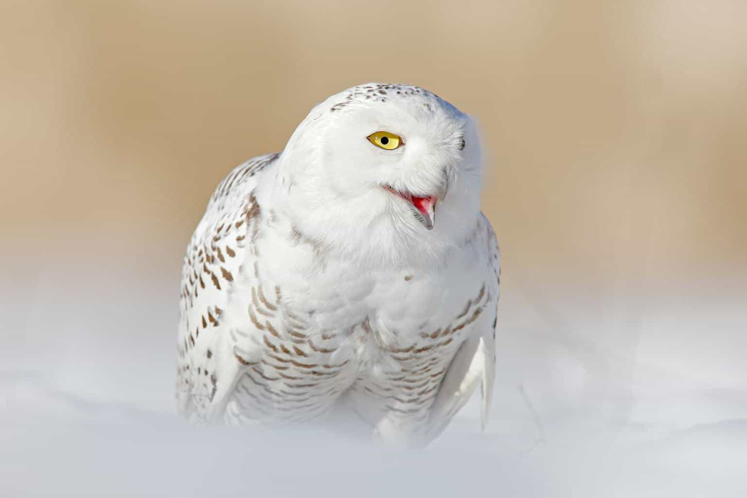 Owls In Colorado