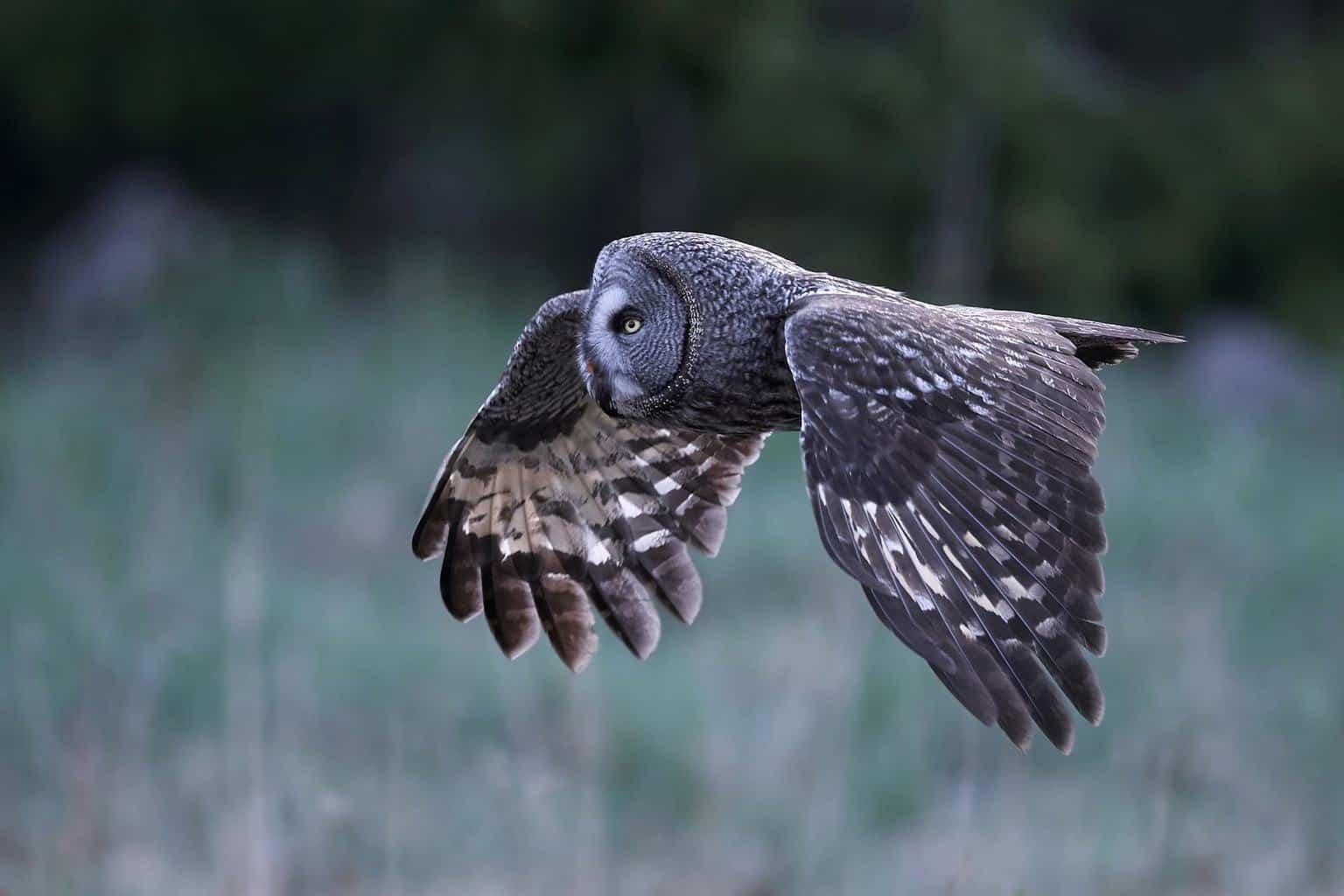 Owls In Idaho
