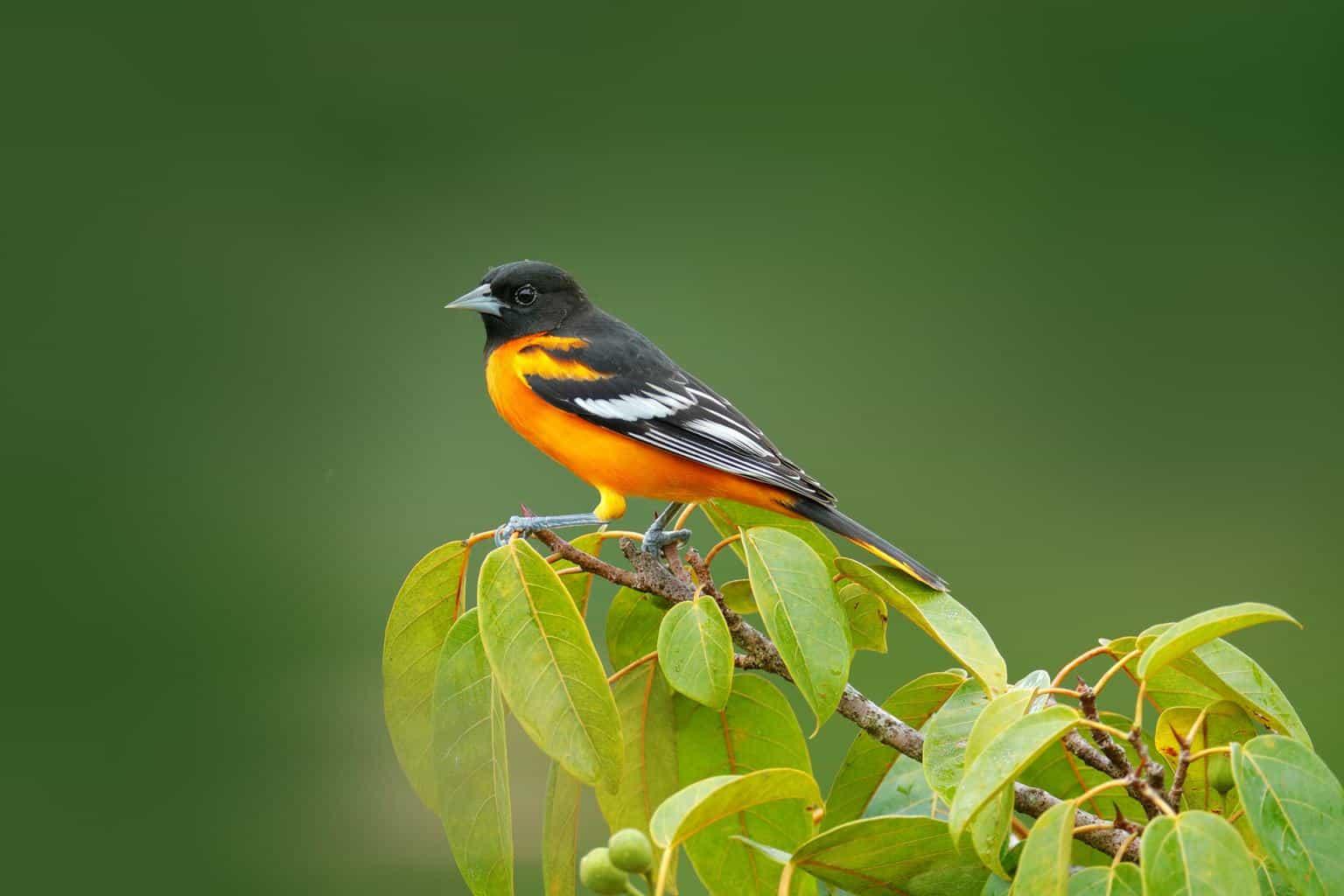 Birds in Arkansas