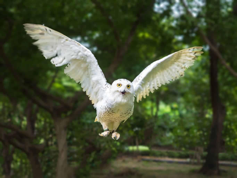 Owls In North Carolina