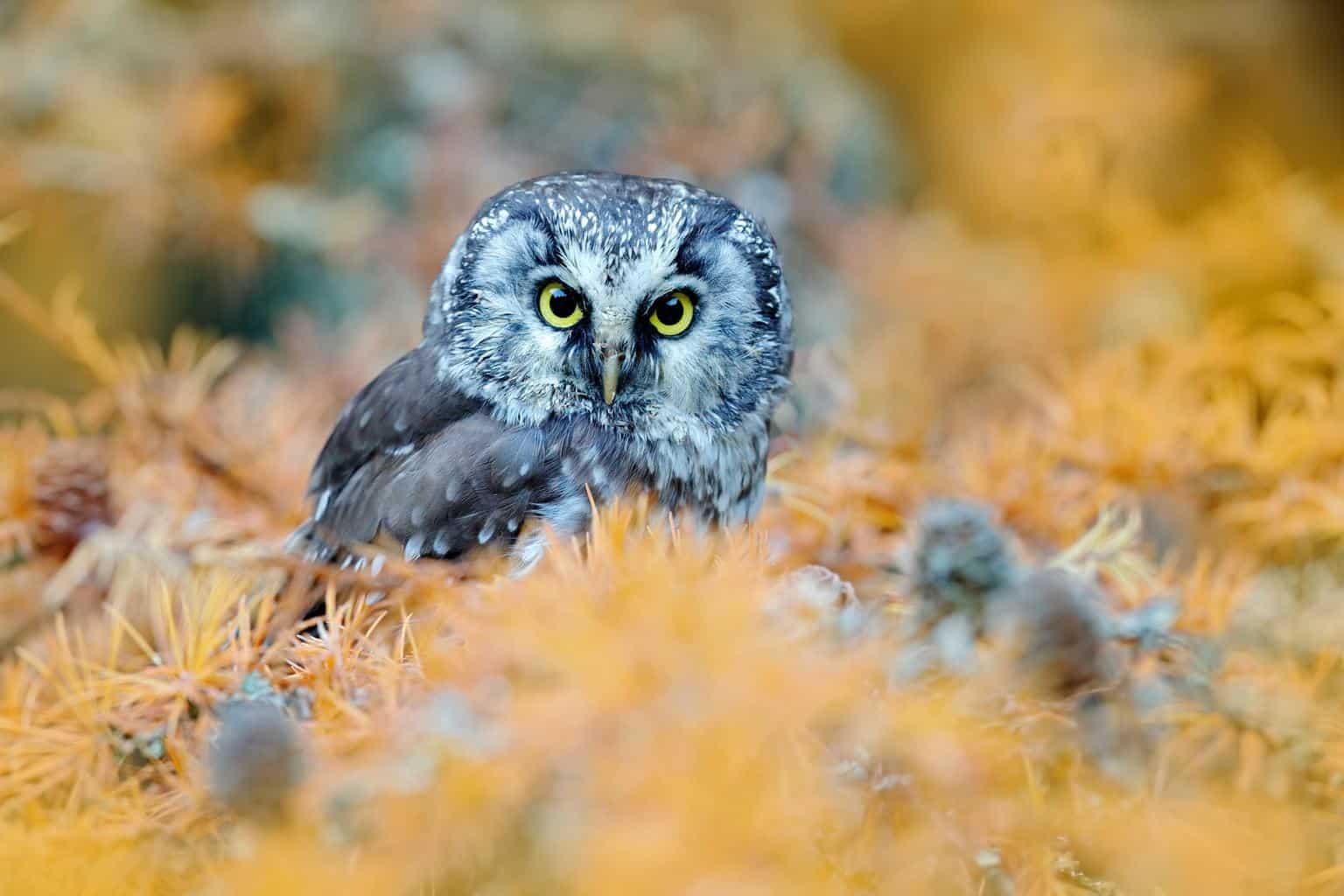 Owls In Rhode Island