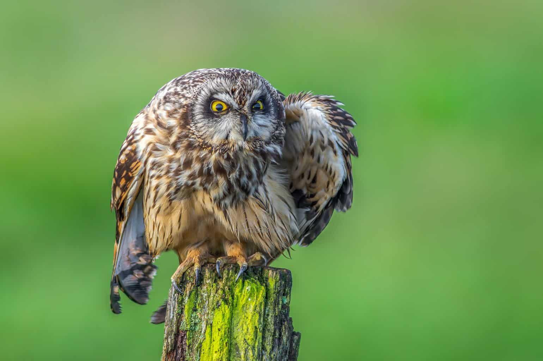 Owls In South Carolina