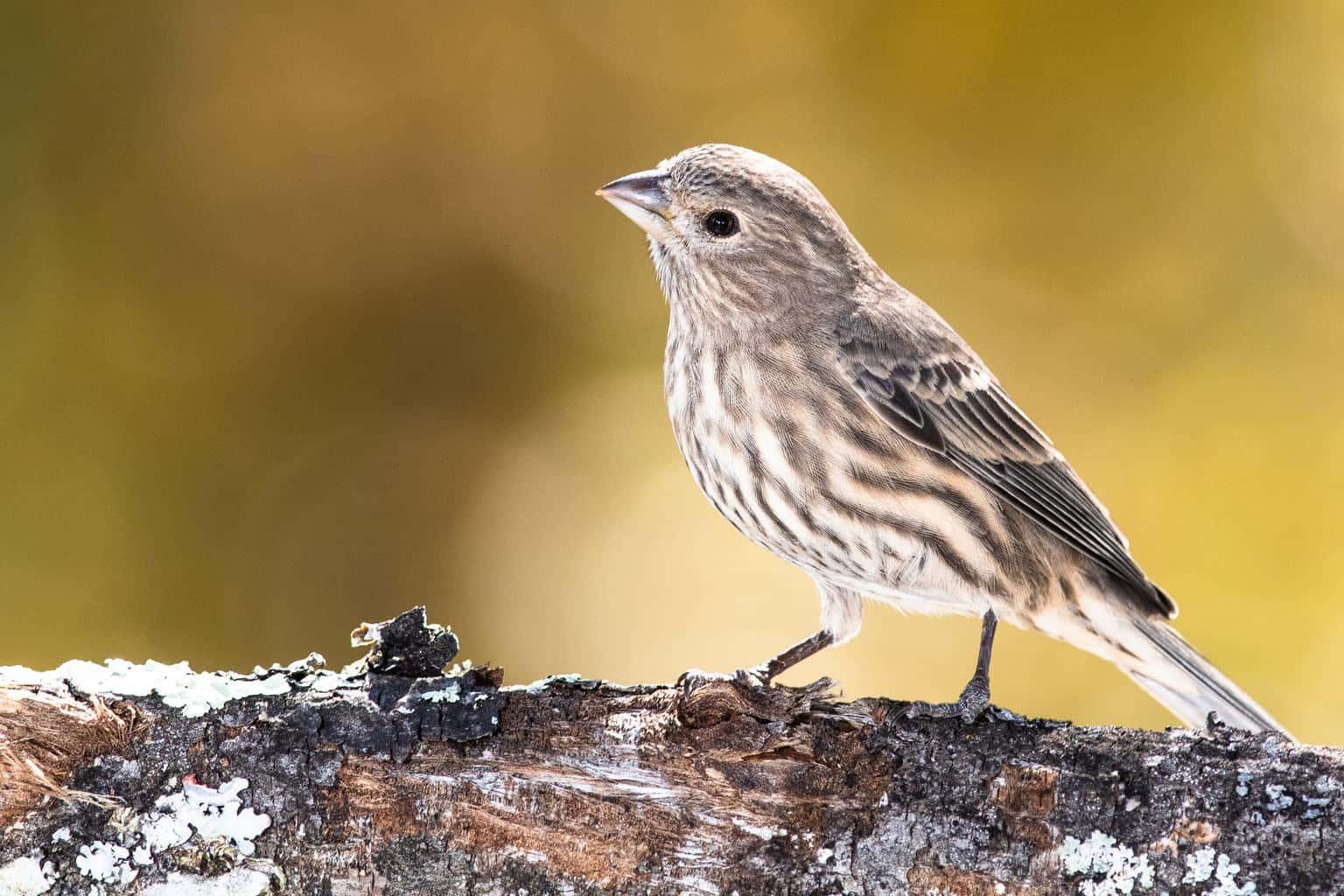 Birds In Delaware