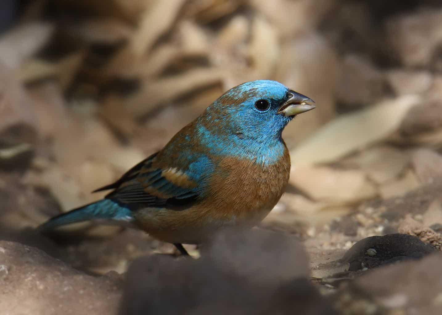 Birds In Idaho