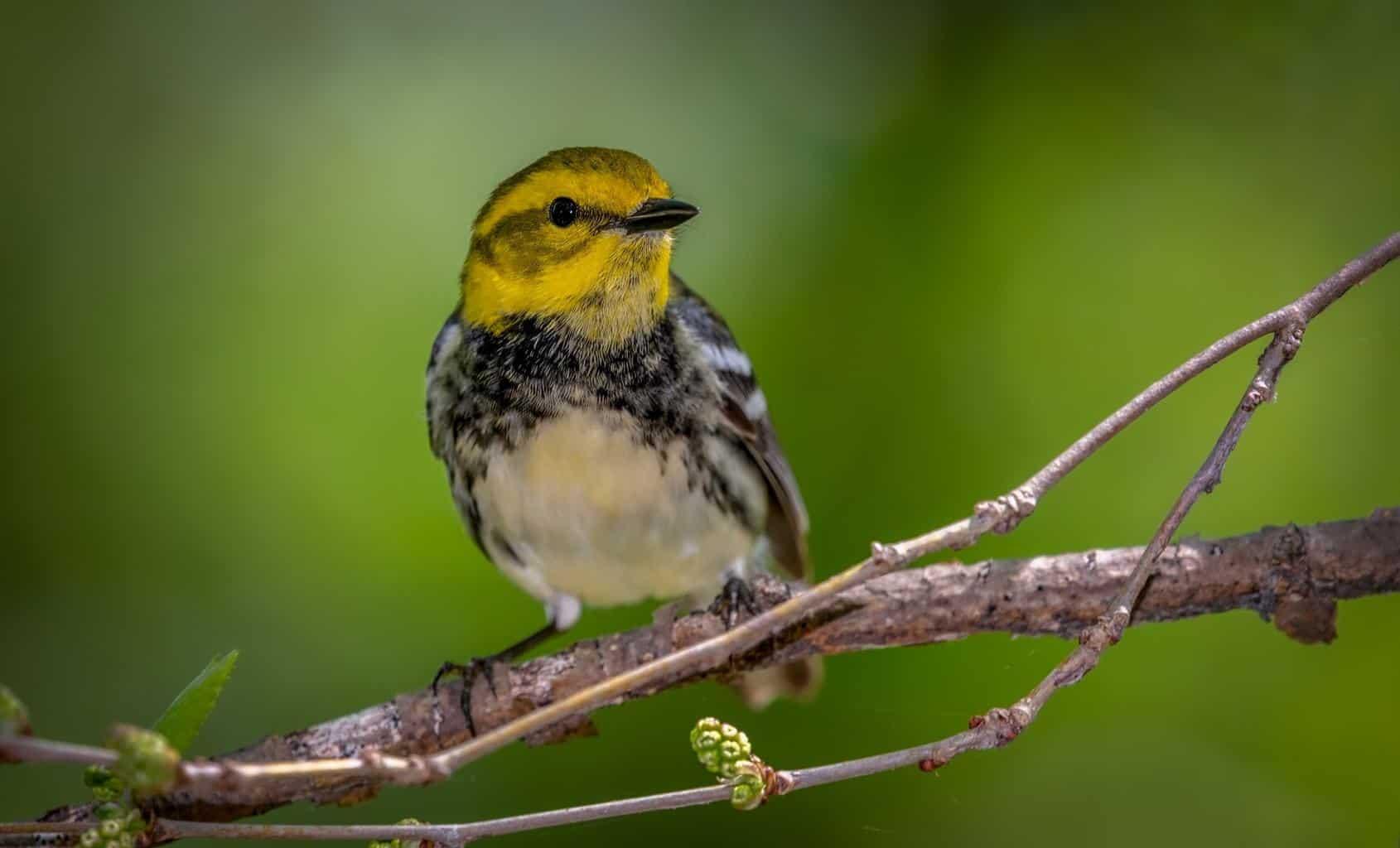 Birds In Illinois