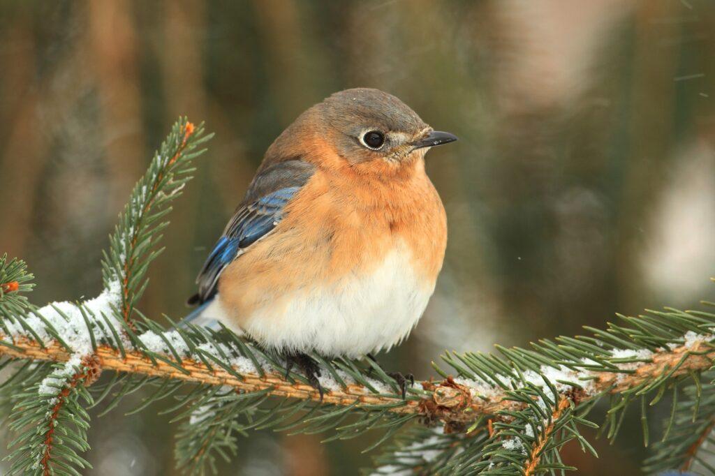 Birds In Indiana